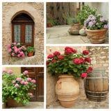 flowering hortensia plants set Royalty Free Stock Images