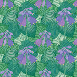 Flowering Hosta Pattern Stock Images