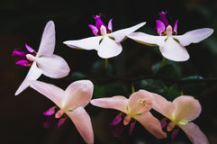Flowering house plants, indoor plants. Orchid branch with six flowers royalty free stock images