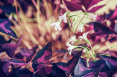 Flowering houseplant Royalty Free Stock Images