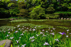 Flowering Japanese garden of Heian shrine, Kyoto Japan. Royalty Free Stock Images