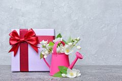 Flowering jasmine in a decorative garden watering can and a gift box. On grey background stock images