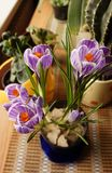 Flowering lilac crocuses in a pot. A flower that can grow at home or in a flowerbed in the yard stock photos