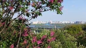 Flowering lilacs in the Kiev botanical garden stock photo