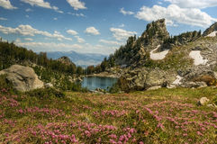 Flowering Lupine Meadows and Amphitheater Lake Royalty Free Stock Images