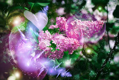 Flowering magically luminous lilac Royalty Free Stock Image