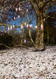 Flowering magnolia and petals on the ground Stock Images