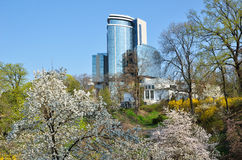 Flowering magnolia in the spring city Stock Photography
