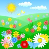Flowering meadow Stock Image