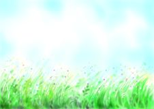 Flowering meadow Royalty Free Stock Images