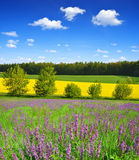 Flowering meadow with blue sky. Stock Photo