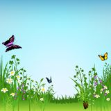 Flowering Meadow and Butterflies Royalty Free Stock Photo