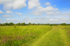 Flowering meadow with a country road Stock Images