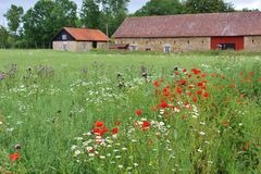 Flowering meadow and farm houses in the Kinnekulle area, Sweden. Flowering Meadow and farm houses in the nature reserve area Kinnekulle, Sweden, Scandinavia stock photography