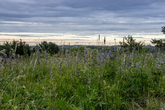 Flowering meadow, field grass on beautiful sky background Royalty Free Stock Images