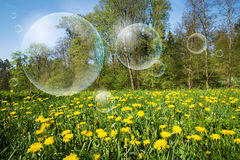 Flowering meadow and flying bubbles Royalty Free Stock Image