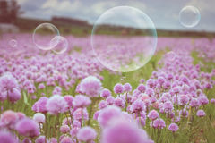 Flowering meadow and flying bubbles from bubble blower Stock Images