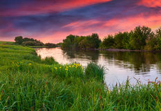 Flowering meadow by river Royalty Free Stock Photography