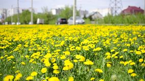 Flowering meadow and road. Nature and civilization.  stock video