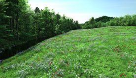 Flowering Meadow and Stream. Coutryside meadow filled with wildflowers, red poppies, daisies, buttercups and lady's smock alongside a small stream, 3d digitally Royalty Free Stock Photos