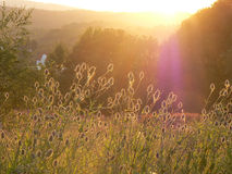 Flowering meadow at sunset Royalty Free Stock Images