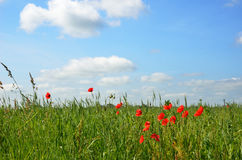 Flowering meadow under the blue sky Stock Photography
