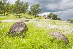 Flowering meadow under sky Royalty Free Stock Images