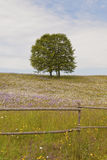 Flowering meadow Stock Photo