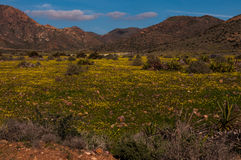 Flowering meadows in cabo de cata Stock Image