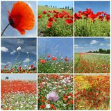 Flowering meadows composition Stock Photos