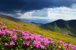 Flowering meadows in the mountains Stock Photos