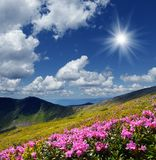 Flowering meadows in the mountains Royalty Free Stock Photo