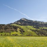 Flowering meadows in Switzerland Stock Images