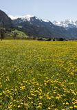 Flowering meadows in Switzerland Stock Image