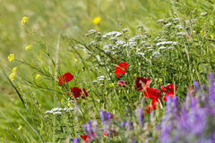 Flowering mountain. In the Apennines Royalty Free Stock Photos