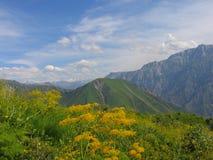 Flowering mountains. Near Brichmulla settlement, Uzbekistan summer 2007 Royalty Free Stock Images