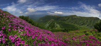 Flowering mountains of Ukraine Stock Images