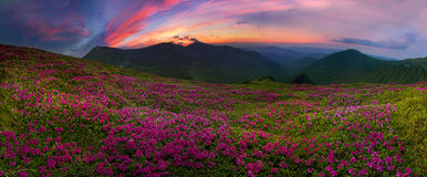 Flowering mountains of Ukraine Royalty Free Stock Images