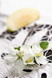 Flowering Of An Apple-tree Royalty Free Stock Photography