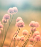 Flowering onion on the meadow Royalty Free Stock Photos