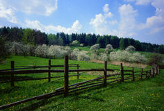 Flowering orchard of fence stock images