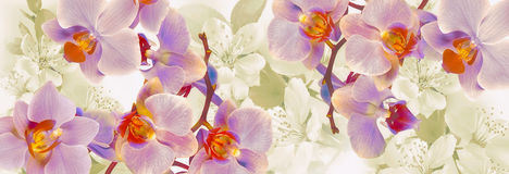 Flowering orchids and cherries decoration stock images