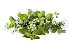 Flowering Oregano Isolated on white Stock Image
