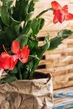 Flowering ornamental plants Royalty Free Stock Image