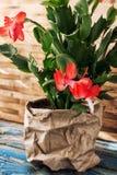 Flowering ornamental plants Stock Images