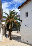 Flowering Palm in Guadalest. A flowering palm tree framed by rustic houses in a Spanish village stock photos