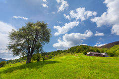 Flowering pear tree. At spring in the mountains Stock Image