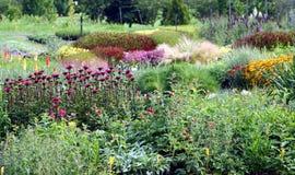 Flowering perennial plants stock photo