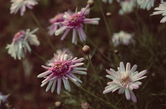 Flowering Stock Photography