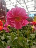 Flowering Pink Petals stock photos
